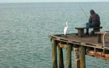 The Florida Fish and Wildlife Conservation Commission wants anglers to participate in a survey to help the agency better set future fishing seasons and catch limits. Credit: MGDBoston/Morguefile.