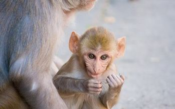 An animal rights group has filed a complaint with the Florida Department of Business and Professional Regulation, alleging mistreatment of monkeys by Florida-based Primate Products. Credit: Garrett Ziegler.