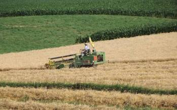 After a decades-long decline, barley, oats, rye and wheat are reemerging in Iowa...as important cover crops. Credit: Practical Farmers of Iowa.
