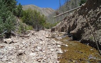 Popular North Creek fishery in Southern Utah being restored. Courtesy: Utah Division of Wildlife Resources
