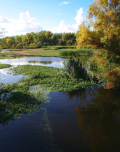 The Sacramento Delta. Credit: ronijava/iStock