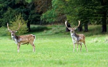 Four captive-hunting preserves in Indiana are operating under a court injunction. Credit: Eric Berthe/Morguefile