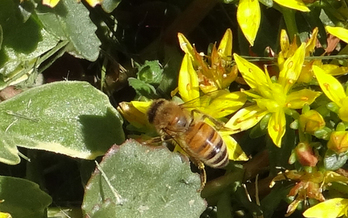 A bee-keeping group says pesticide labels carry inaccurate information to protect bees. Credit: Deborah C. Smith