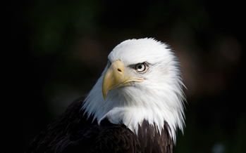 A new poll shows 80 percent of Colorado voters support the Endangered Species Act. Credit: Alptraum/iStockphoto