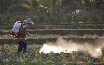 The EPA is updating standards to protect the nation's farmworkers from pesticide poisoning. Credit: Enviromantic/iStockphoto.