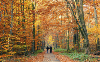 Simply taking a brisk walk every day can pay real dividends in keeping your heart healthy and your blood pressure and cholesterol in check. Credit: sborisov/iStockPhoto.com