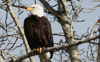 A new poll shows 75 percent of Montana voters support the Endangered Species Act. Credit: Deborah C. Smith