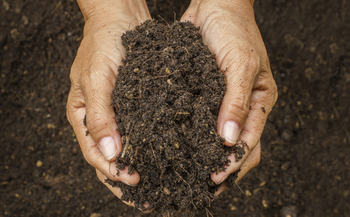 Skip the fertilizer. The addition of compost to your soil in the fall will help your lawn be healthy and green next year. Credit: bluedogroom