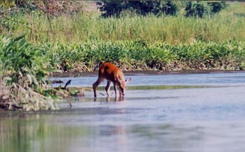 Reducing pollution benefits fish and wildlife throughout the Chesapeake Bay watershed. Credit: Mary Hollinger, NOAA/commons.wikimedia.org