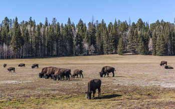 At 1.6 million acres, the Kaibab National Forest is located in northern Arizona on the Kaibab Plateau, part of the larger Colorado Plateau. Credit: Michele Vacchiano/iStockphoto.