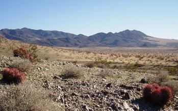 Mojave Trails area, part of the lands protected by the Desert Renewable Energy Conservation Plan Credit: Bryn Jones