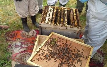 It will soon be easier for gardeners to make plant selections that are less likely to harm North Carolina's honeybee population. (Hiberianscribe/morguefile)