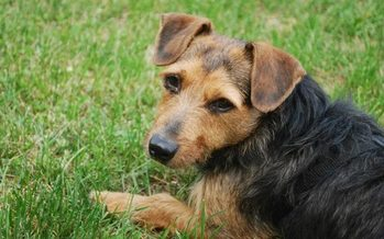 Of the 125,000 animals that end up in Indiana shelters, about 40 percent are euthanized. (Virginia Carter)