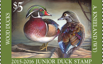 Wyoming took home the Junior Duck Stamp Program's top prize for the first time last year with Andrew Kneeland's portrait of a pair of wood ducks. (U.S. Fish and Wildlife Service)