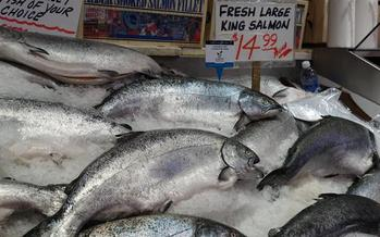 Washington currently estimates people eat about 8 ounces of fish per month. (lauramusikanski/Morguefile)