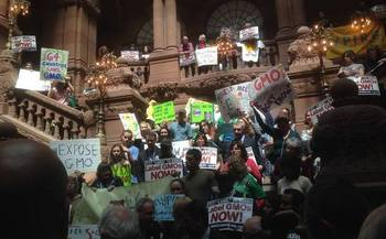 Supporters of GMO labeling urge passage of a law in New York. (GMOFreeNY.net)