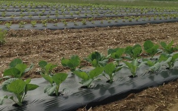 Moving some produce from this farm in Shelby County and others to food banks in Kentucky is seen as a win-win. (Courtney Farms, LLC)