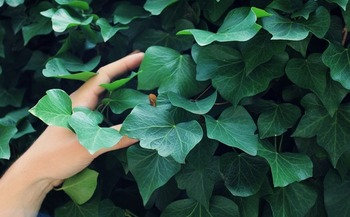 Women living closer to high levels of green vegetation have lower mortality rates than do women living in less green areas, according to a new report. (Pixabay)