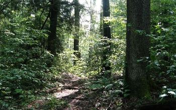 An event in Richmond will focus on conservation and trees. (Beth Little)