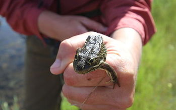 The spotted frog's critical habitat is in Deschutes, Jackson, Klamath, Lane and Wasco counties. (Maria Thi Mai/Bureau of Land Management Oregon and Washington)