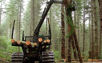 The Bureau of Land Management has proposed changes to its forest management plan that would increase logging in western Oregon. (Bureau of Land Management)