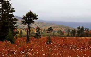 Supporters say a Birthplace of Rivers National Monument - including the Cranberry Glades - would mean more jobs at a time when West Virginia needs them. (Mike Costello)