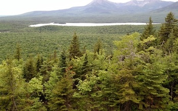 Some Mainers are in Washington, D.C., today to urge designation of a North Woods National Monument. (P. Corrigan, Jr).