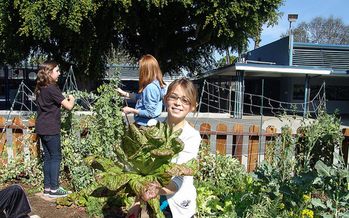 Olympic Peninsula YMCAs are using school gardens to teach children during the summer. (Growing Great/flickr)