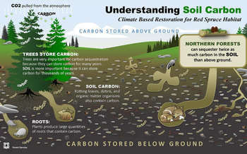 Highland Appalachian spruce can help reduce the amount of carbon in the air. (USDA)