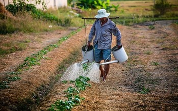 Research shows identity theft facilitated by companies is common in migrant farm work. (Pixabay)