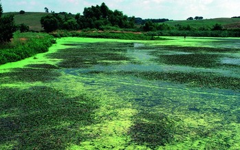 Harmful algae outbreaks in Iowa lakes, ponds, streams and rivers are more likely during this time of year. (Lynn Betts/ USDA Natural Resources Conservation Service)