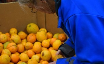 Indiana farmers are being asked to sell surplus or blemished produce to food banks. (Virginia Carter)