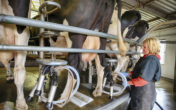 As milk and dairy feed prices drop, experts said Minnesota dairy farmers need better protections against market fluctuations. (iStockphoto)