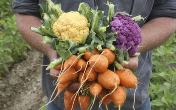A new program aims to bring locally sourced fruits and vegetables to more Wisconsin children. (UW Extension)