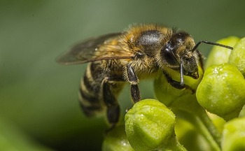 A new study of plants purchased at national retail outlets shows a drop in pesticides harmful to bees. (Pixabay)