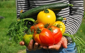 A new study documents the educational, health, nutritional and other benefits of urban agriculture. (Pixabay)