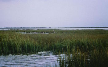 Wetlands need to be able to migrate inland as sea levels rise. (U.S. Fish and Wildlife Service/Wikimedia Commons)