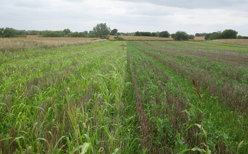 Cover crops can produce about three tons of forage per acre. (Angela Florence/Flickr)
