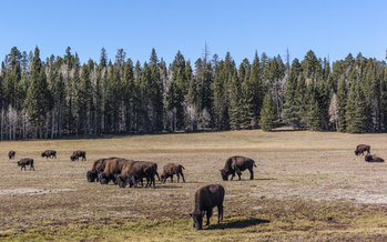 Parts of the Kaibab National Forest are coveted by private interests for mining development. (Michele Vacchiano/iStockphoto)