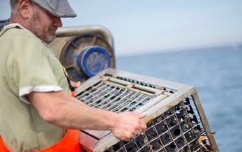 Gulf Coast fishermen are relying on farmers in southwest Wisconsin to help keep the water as clean as possible. (Solstock/iStockPhoto.com)