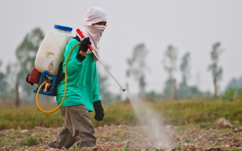 Farmworker advocates are petitioning the EPA to ban the use of a widely used toxic pesticide in the fields.(Wasan Gredpee/iStockphoto)