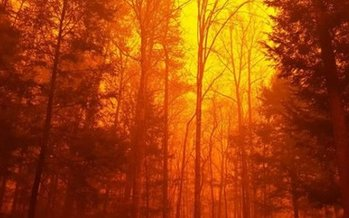The night sky was bright orange on Monday night as wildfires engulfed parts of Gatlinburg, Tenn., displacing thousands and destroying dozens of homes and businesses. (National Park Service)