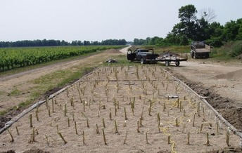 Constructed wetlands are an efficient and economical way to treat wastewater. (Lloyd roz /Wikimedia Commons)