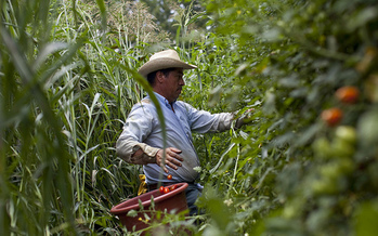 Farmers say the price of fruits and veggies will go up if Donald Trump's plan to deport undocumented workers is carried out. (Bread for the World/flickr.com)
