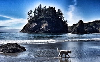 The view on a walk below the Trinidad Head, an area now protected and more accessible to the public. (Julie Fulkerson)