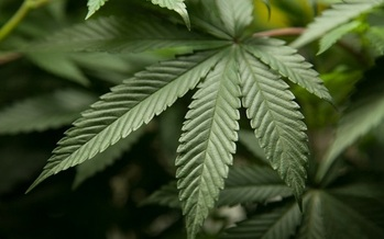 Lawmakers in Indiana have introduced several bills to legalize medicinal marijuana. (fbi.gov)
