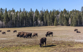 Advocates are pushing to save 'Planning 2.0,' a set of guidelines meant to foster more public input on the future of such federal lands as the Kaibab National Forest. (Michelle Vacchiano/iStockphoto)