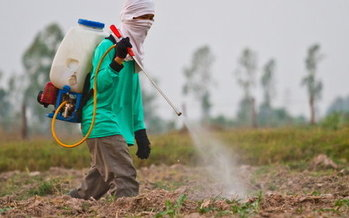 Leaked letters from Dow Chemical executives indicate they've asked the Trump administration to scuttle studies critical of Dow pesticide products. (Wasan Gredpree/iStockphoto)