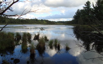 People living near Evart fear a potash mining operation could destroy the sensitive wetlands around the area. (K. Ford)