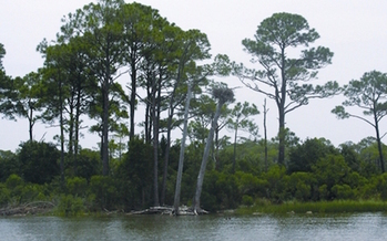 The health of the Apalachicola ecosystem is the subject of a lawsuit. (Florida Department of Environmental Protection)